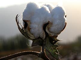 2016年度全国进口棉花质量状况白皮书发布