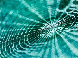 这种蜘蛛丝纤维可被用于制造织物、传感器和其它材料