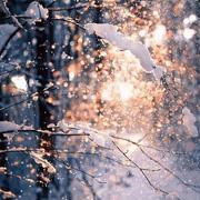 sunroo阳光鼠:变身冬日小暖阳,天气再冷都不怕