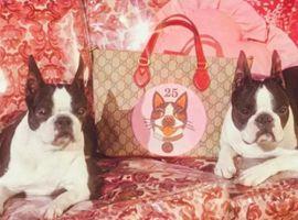 深谙千禧一代喜好的Gucci这次要靠一条狗玩转春节