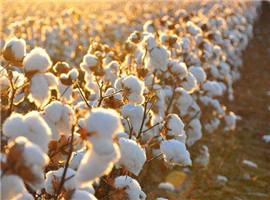 生活方式调查:79%消费者表示最爱穿棉纤维运动服饰