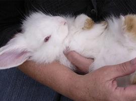 善待动物组织PETA胜利!Gucci都不忍心用兔毛了