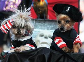 H&M变身宠物服装品牌 还能否留住快时尚消费人群