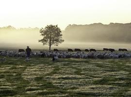 开云集团开创性地将再生农业应用于时尚产业供应链