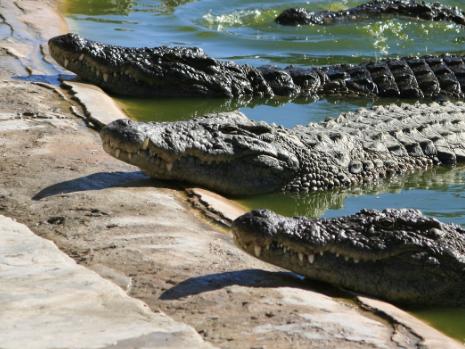 Prada 向美国鳄鱼皮供应商 Capo-USA 索赔