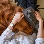 新申亚麻大师 | 让宠物和亚麻家居和谐相处