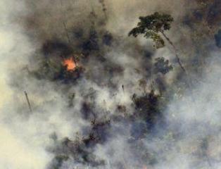 H&M暂停采购巴西皮革 因亚马逊大火危害环保