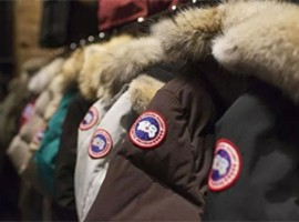 羽绒服涨价,波司登、加拿大鹅哪家强?