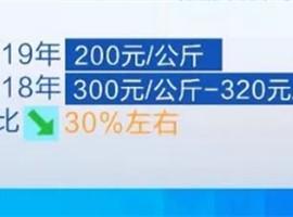天冷了保暖品卻涼了 羊絨主產地價格降了30%