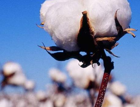 新型冠状病毒疫情对化纤产业上下游产品的价格走势预测