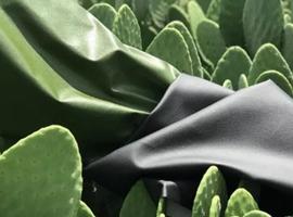 仙人掌皮革或将取代动物皮革?